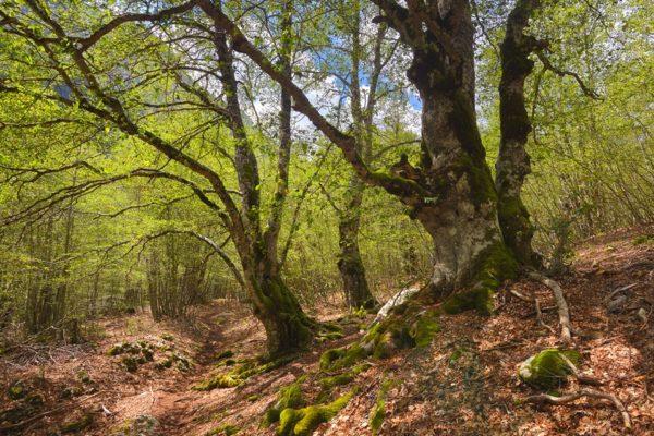 Parco Nazionale d'Abruzzo,Lazio e Molise - Flora