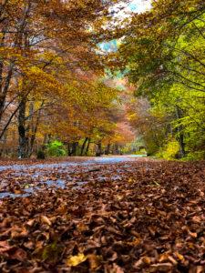 Camosciara - Parco Nazionale d'Abruzzo,Lazio e Molise
